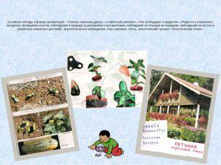 Основные методы и формы организации - «Письмо зеленому другу», «Секретный раз