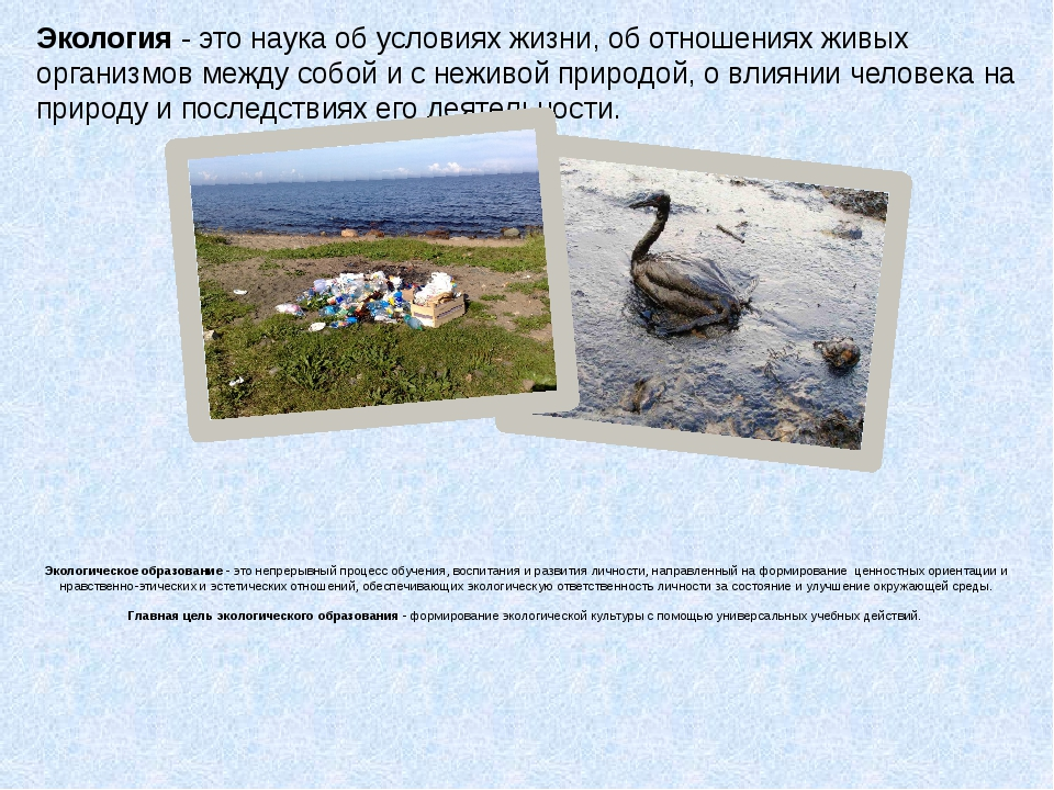 Экологическое образование - это непрерывный процесс обучения, воспитания и р...
