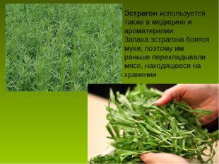 Эстрагон используется также в медицине и ароматерапии. Запаха эстрагона боятс