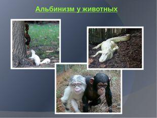 Альбинизм у животных