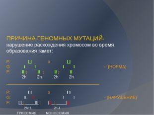 ПРИЧИНА ГЕНОМНЫХ МУТАЦИЙ- нарушение расхождения хромосом во время образовани