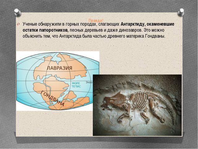 Правда! Ученые обнаружили в горных породах, слагающих Антарктиду, окаменевшие...