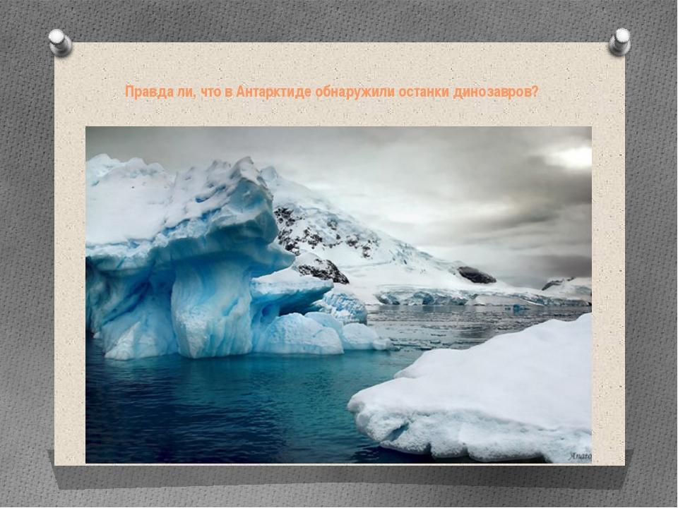 Правда ли, что в Антарктиде обнаружили останки динозавров?