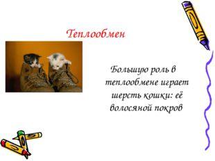 Теплообмен Большую роль в теплообмене играет шерсть кошки: её волосяной покров