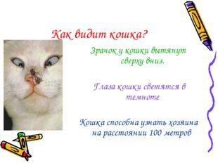 Как видит кошка? Зрачок у кошки вытянут сверху вниз. Глаза кошки светятся в т