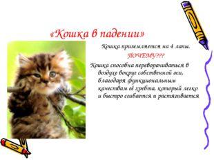 «Кошка в падении» Кошка приземляется на 4 лапы. ПОЧЕМУ??? Кошка способна пере