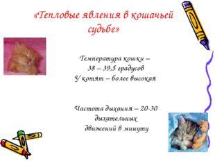 «Тепловые явления в кошачьей судьбе» Температура кошки – 38 – 39,5 градусов У