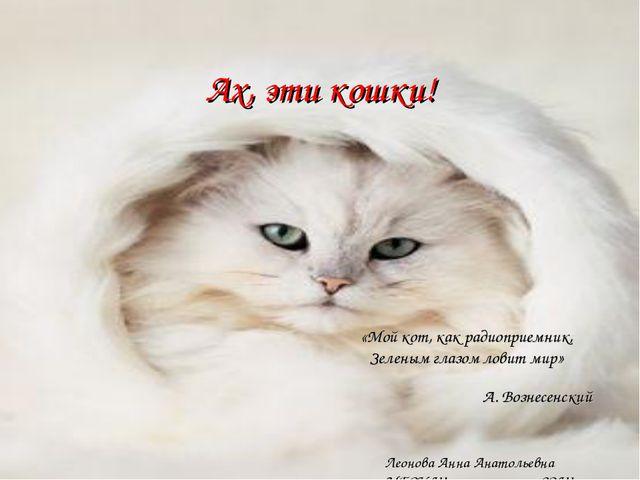 Ах, эти кошки! «Мой кот, как радиоприемник, Зеленым глазом ловит мир» А. Возн...