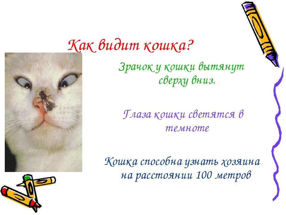 Как видит кошка? Зрачок у кошки вытянут сверху вниз. Глаза кошки светятся в т...