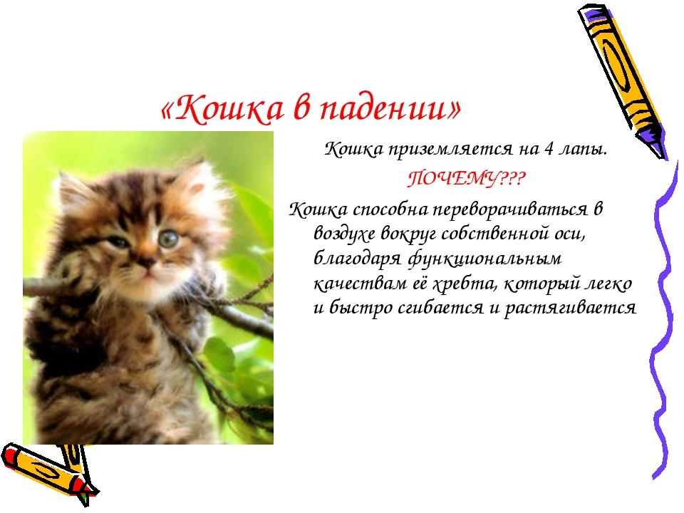 «Кошка в падении» Кошка приземляется на 4 лапы. ПОЧЕМУ??? Кошка способна пере...