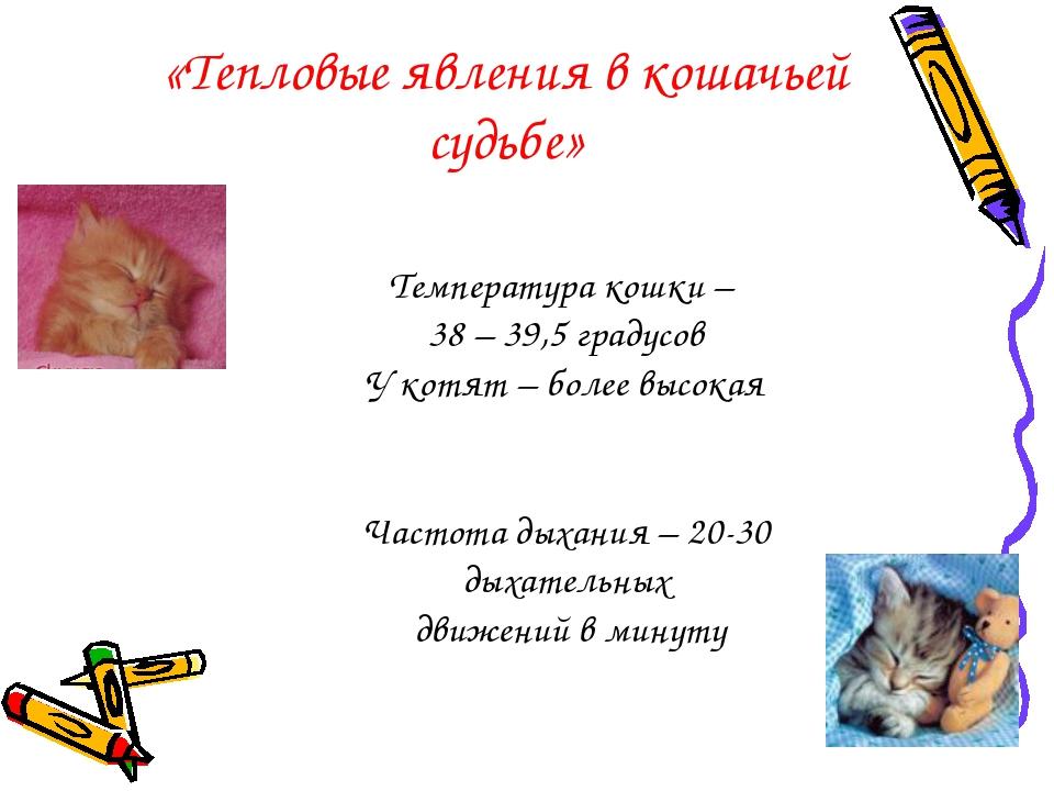«Тепловые явления в кошачьей судьбе» Температура кошки – 38 – 39,5 градусов У...