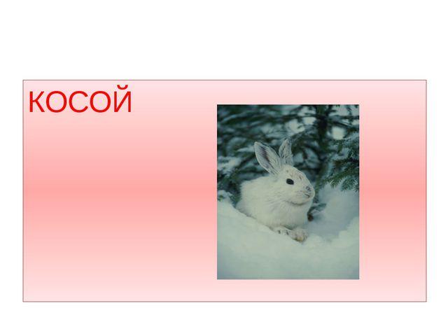 КОСОЙ