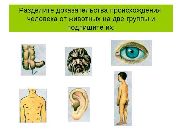 Разделите доказательства происхождения человека от животных на две группы и п...