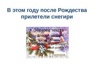 В этом году после Рождества прилетели снегири