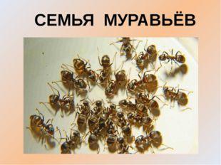 СЕМЬЯ МУРАВЬЁВ