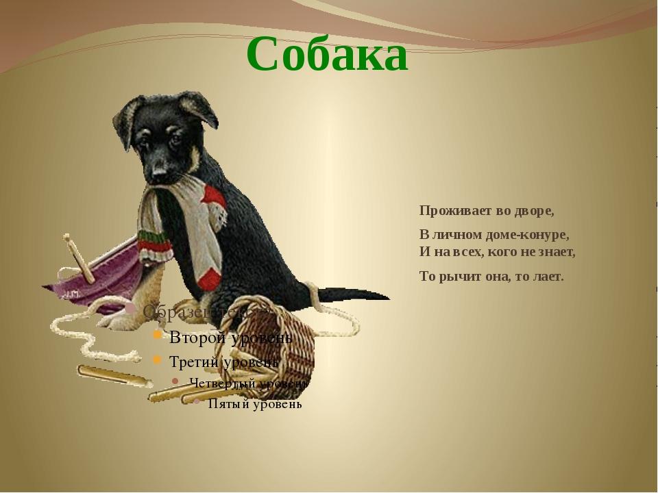 Собака Проживает во дворе, В личном доме-конуре, И на всех, кого не знает,...