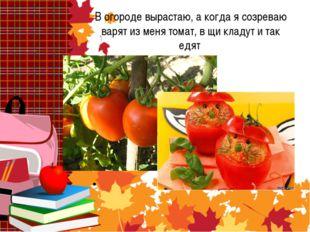 В огороде вырастаю, а когда я созреваю варят из меня томат, в щи кладут и та