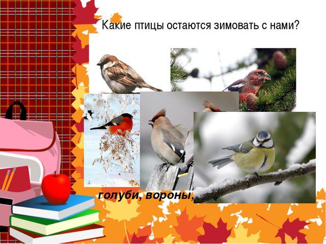 Какие птицы остаются зимовать с нами? Снегири, синицы, воробьи, голуби, ворон...