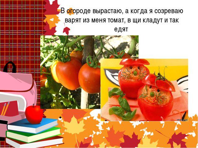 В огороде вырастаю, а когда я созреваю варят из меня томат, в щи кладут и та...