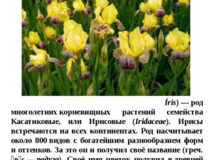 Цветы в нашем цветнике Ирисы И́рис, илиКаса́тик(лат. Íris)—род многолетни