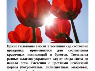 Цветы в нашем цветнике Тюльпан Яркиетюльпаны вносят в весенний сад состояние