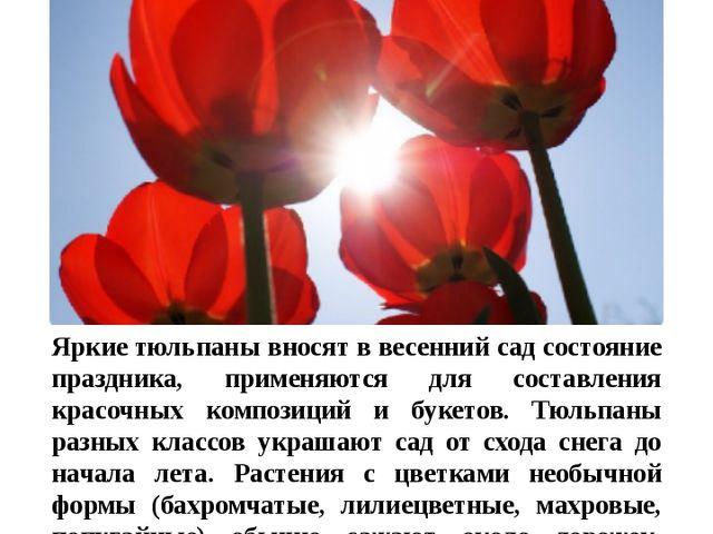 Цветы в нашем цветнике Тюльпан Яркиетюльпаны вносят в весенний сад состояние...
