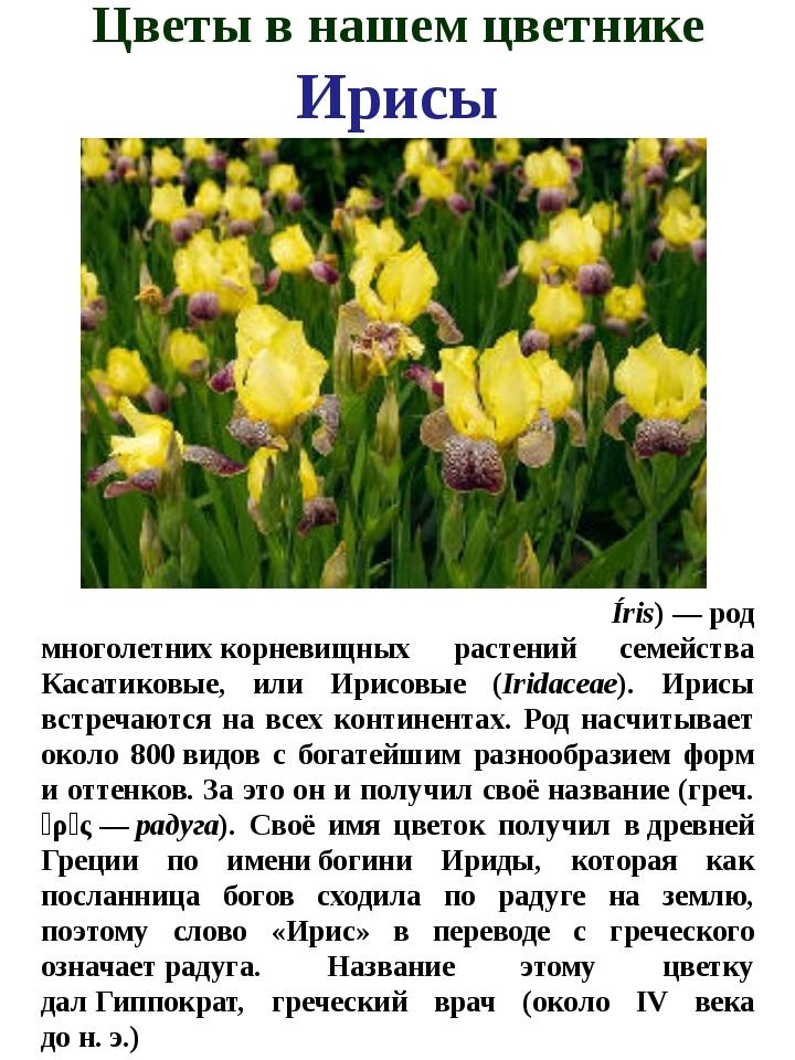 Цветы в нашем цветнике Ирисы И́рис, илиКаса́тик(лат. Íris)—род многолетни...