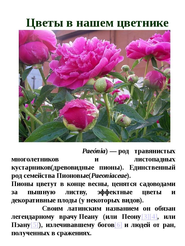 Цветы в нашем цветнике Пио́н(лат. Paeónia)—род травянистых многолетников...
