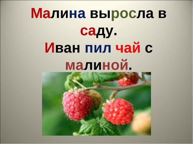Малина выросла в саду. Иван пил чай с малиной.
