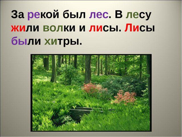 За рекой был лес. В лесу жили волки и лисы. Лисы были хитры.