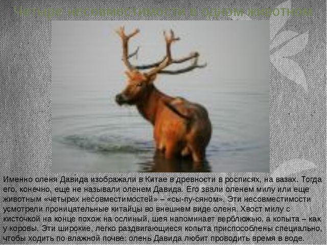Четыре несовместимости в одном животном Именно оленя Давида изображали в Кита...