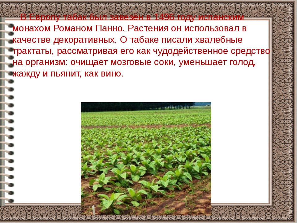 В Европу табак был завезён в 1496 году испанским монахом Романом Панно. Раст...