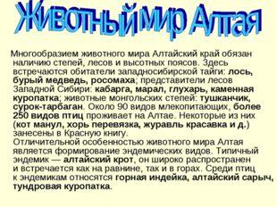 Многообразием животного мира Алтайский край обязан наличию степей, лесов ив