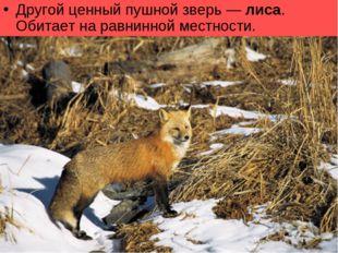 Другой ценный пушной зверь— лиса. Обитает наравнинной местности.