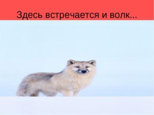 Здесь встречается и волк...