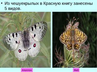 Из чешуекрылых в Красную книгу занесены 5 видов. Аполлон Феб