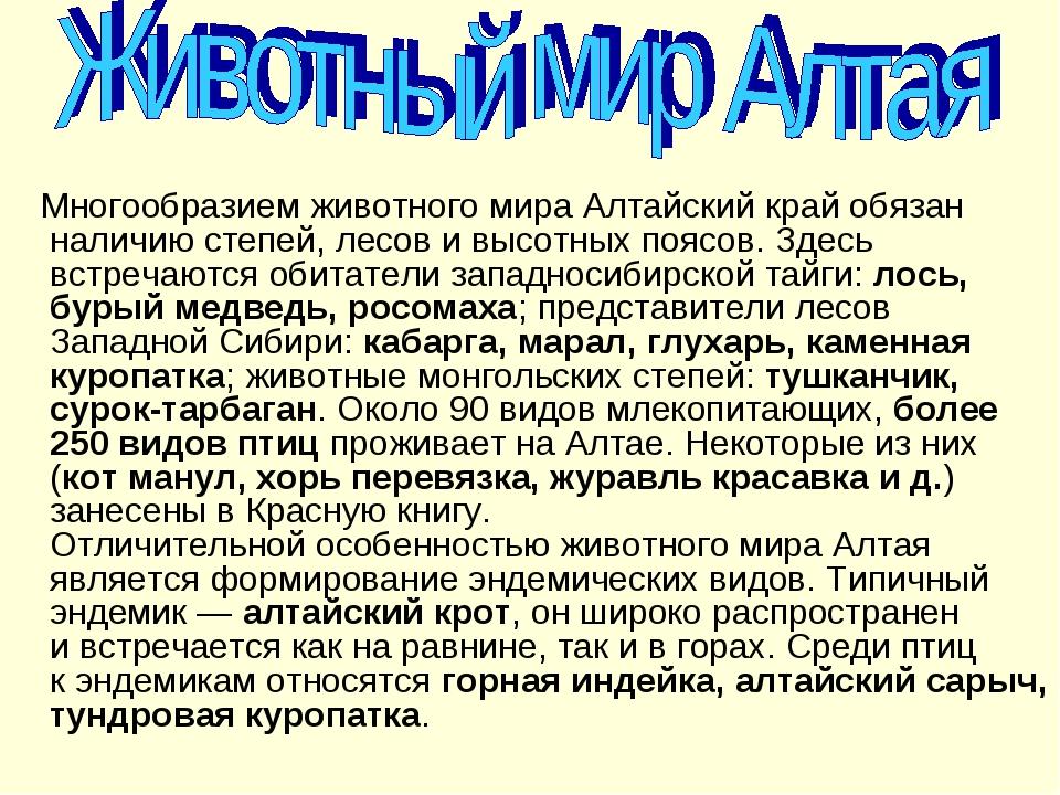 Многообразием животного мира Алтайский край обязан наличию степей, лесов ив...