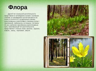 Флора Другой тип зональной растительности представлен в заповеднике лугами и