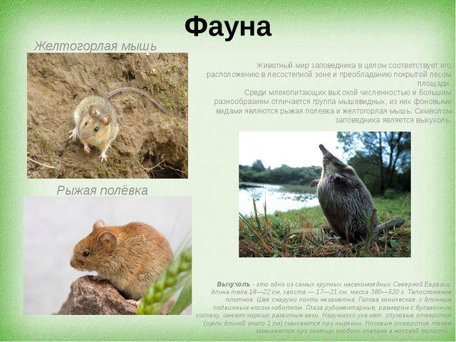 Фауна Желтогорлая мышь Рыжая полёвка Животный мир заповедника в целом соответ...