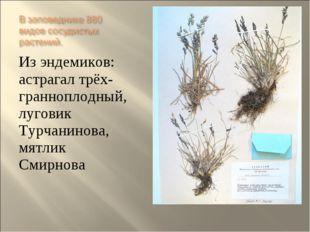 Из эндемиков: астрагал трёх- гранноплодный, луговик Турчанинова, мятлик Смирн