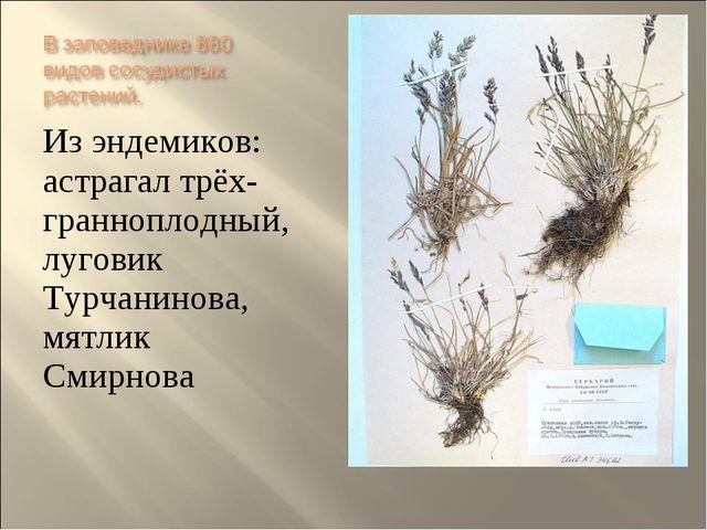 Из эндемиков: астрагал трёх- гранноплодный, луговик Турчанинова, мятлик Смирн...