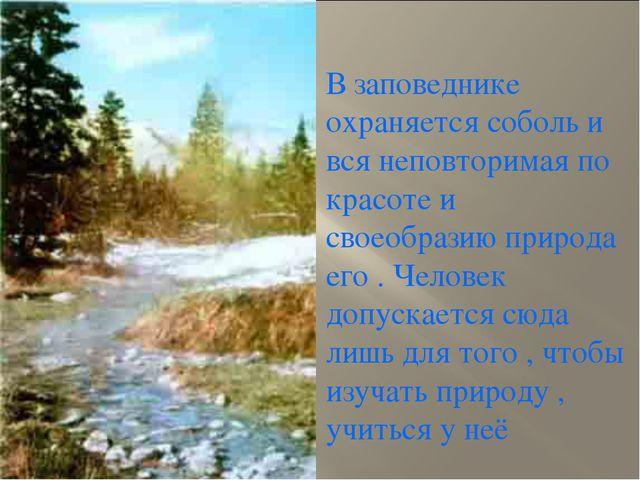 В заповеднике охраняется соболь и вся неповторимая по красоте и своеобразию п...