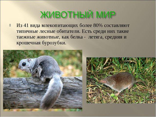 Из 41 вида млекопитающих более 80% составляют типичные лесные обитатели. Есть...