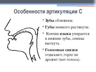 Особенности артикуляции С Зубы сближены. Губы немного растянуты. Кончик языка