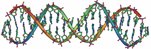 239px-799px-DNA_Overview_rus2[1]