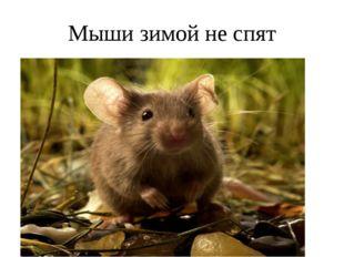Мыши зимой не спят