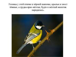 Головка у этой птичке в чёрной шапочке, крылья и хвост тёмные, а грудка ярко-