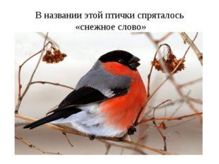 В названии этой птички спряталось «снежное слово»