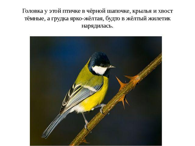 Головка у этой птичке в чёрной шапочке, крылья и хвост тёмные, а грудка ярко-...