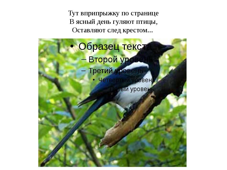 Тут вприпрыжку по странице В ясный день гуляют птицы, Оставляют след крестом...